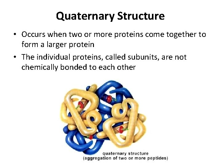 Quaternary Structure • Occurs when two or more proteins come together to form a
