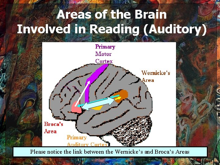 Areas of the Brain Involved in Reading (Auditory) Please notice the link between the