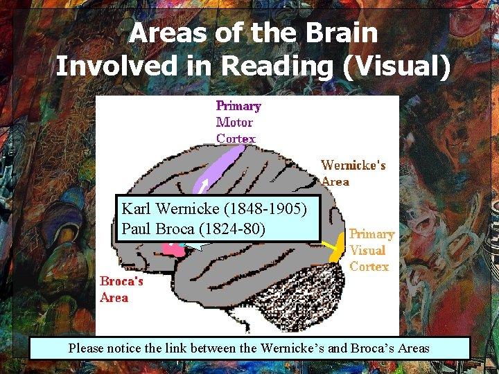 Areas of the Brain Involved in Reading (Visual) Karl Wernicke (1848 -1905) Paul Broca