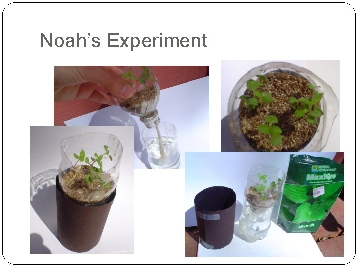 Noah's Experiment