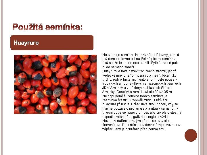 Huayruro je semínko intenzivně rudé barvy, pokud má černou skvrnu asi na třetině plochy