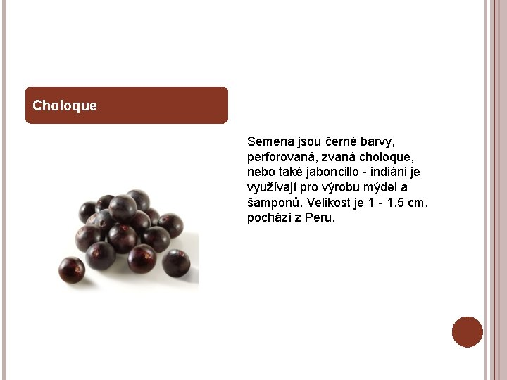 Choloque Semena jsou černé barvy, perforovaná, zvaná choloque, nebo také jaboncillo - indiáni je