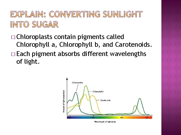 � Chloroplasts contain pigments called Chlorophyll a, Chlorophyll b, and Carotenoids. � Each pigment