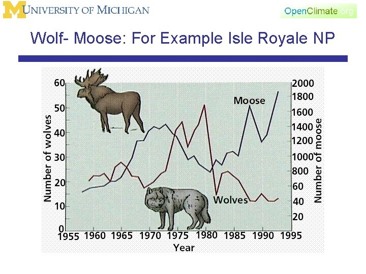 Wolf- Moose: For Example Isle Royale NP