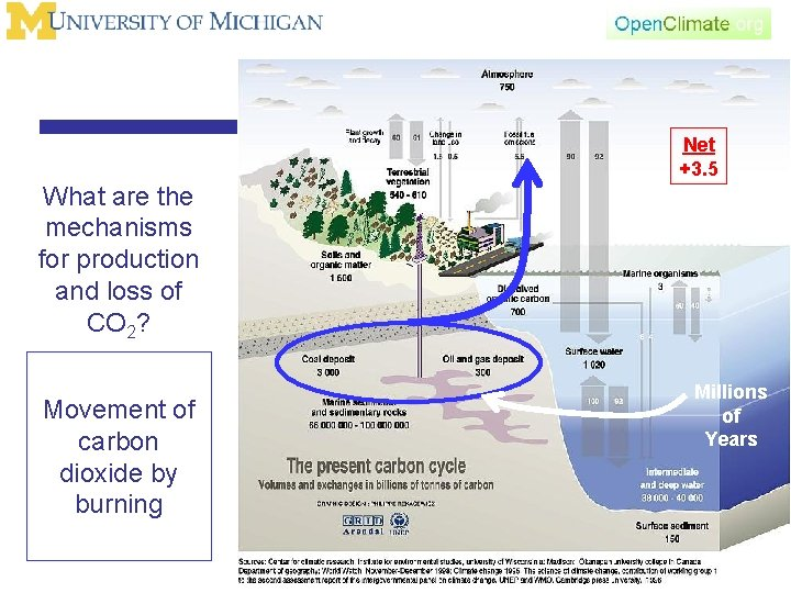 Net +3. 5 What are the mechanisms for production and loss of CO 2?