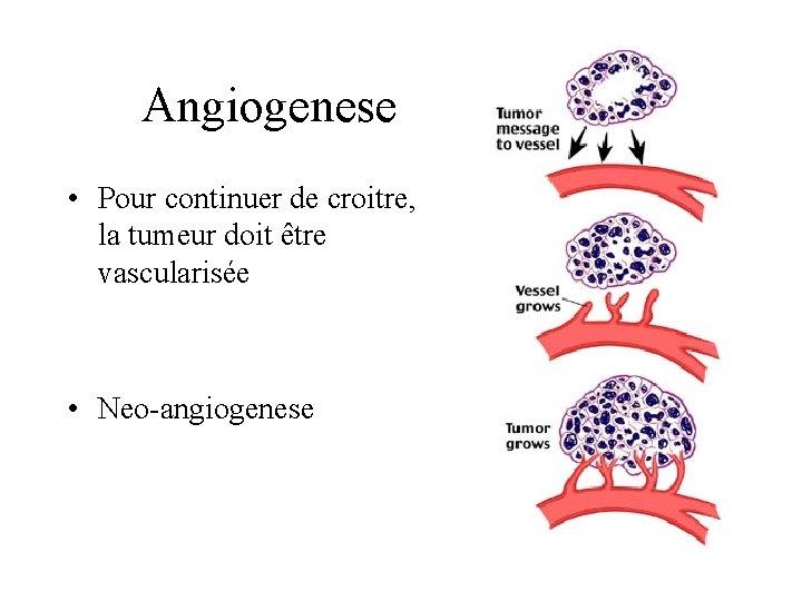 Angiogenese • Pour continuer de croitre, la tumeur doit être vascularisée • Neo-angiogenese
