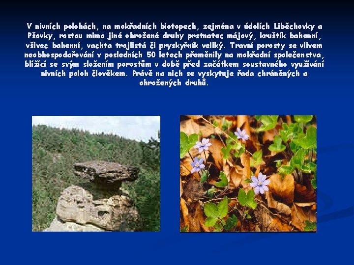 V nivních polohách, na mokřadních biotopech, zejména v údolích Liběchovky a Pšovky, rostou mimo