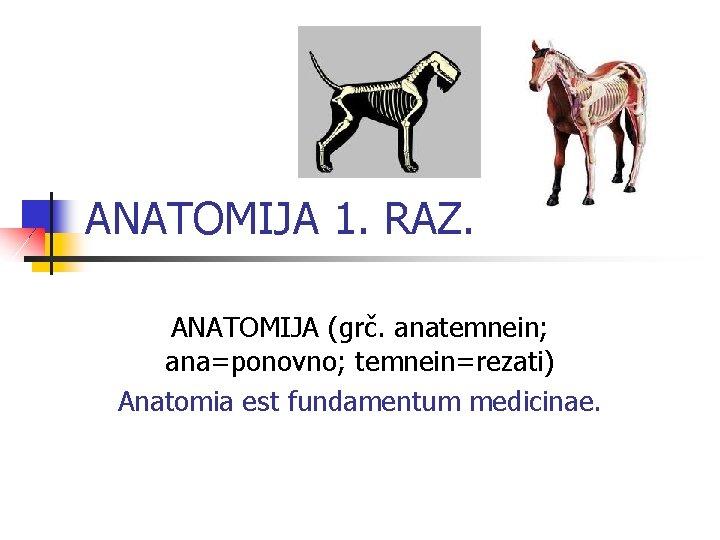 ANATOMIJA 1. RAZ. ANATOMIJA (grč. anatemnein; ana=ponovno; temnein=rezati) Anatomia est fundamentum medicinae.