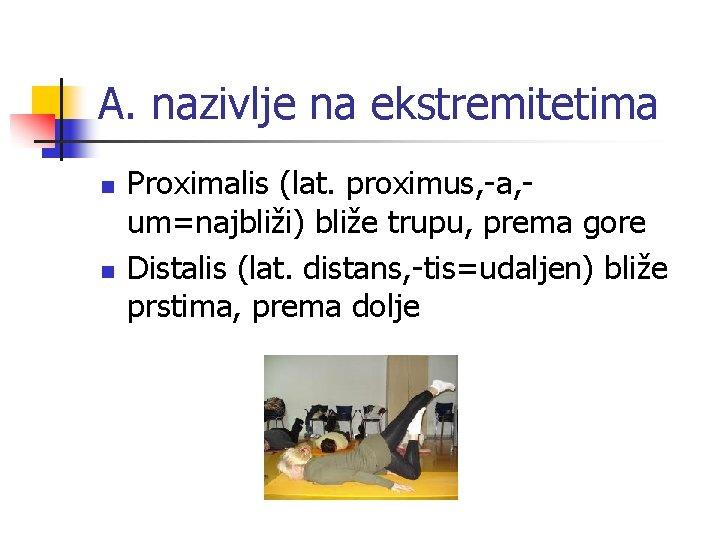 A. nazivlje na ekstremitetima n n Proximalis (lat. proximus, -a, um=najbliži) bliže trupu, prema