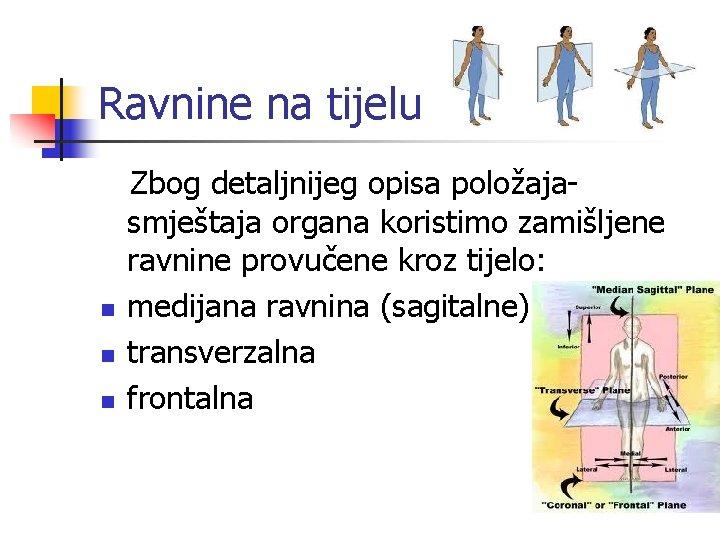 Ravnine na tijelu n n n Zbog detaljnijeg opisa položajasmještaja organa koristimo zamišljene ravnine