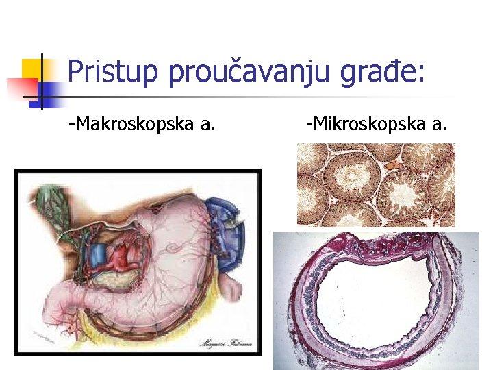 Pristup proučavanju građe: -Makroskopska a. -Mikroskopska a.