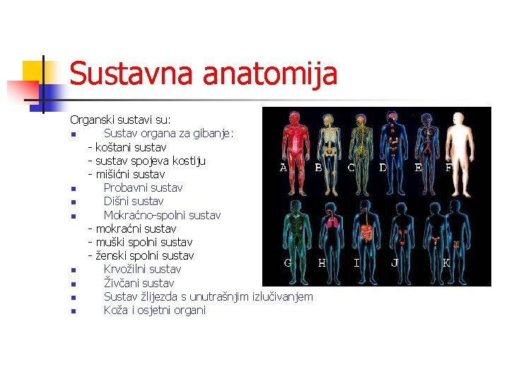 Sustavna anatomija Organski sustavi su: n Sustav organa za gibanje: - koštani sustav -