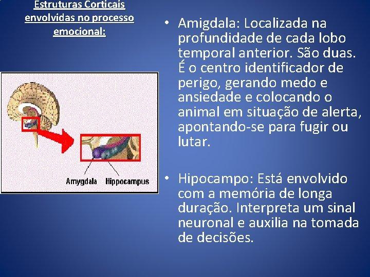 Estruturas Corticais envolvidas no processo emocional: • Amigdala: Localizada na profundidade de cada lobo