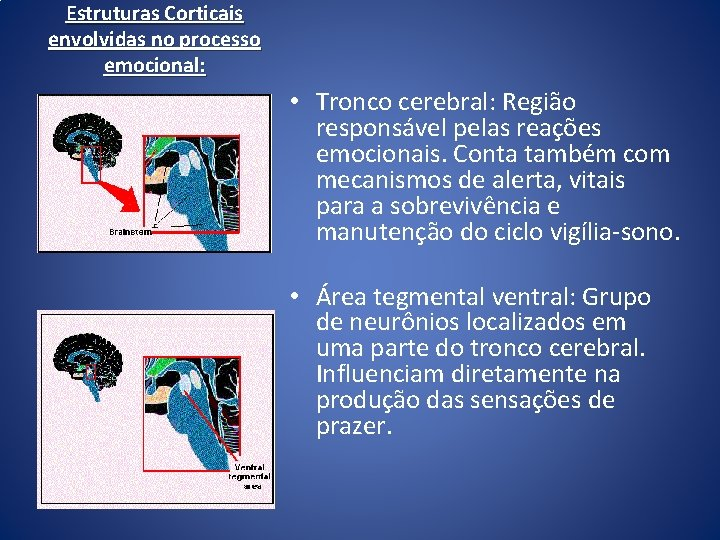 Estruturas Corticais envolvidas no processo emocional: • Tronco cerebral: Região responsável pelas reações emocionais.