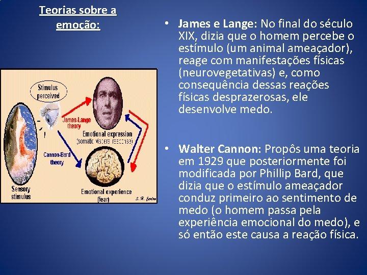 Teorias sobre a emoção: • James e Lange: No final do século XIX, dizia