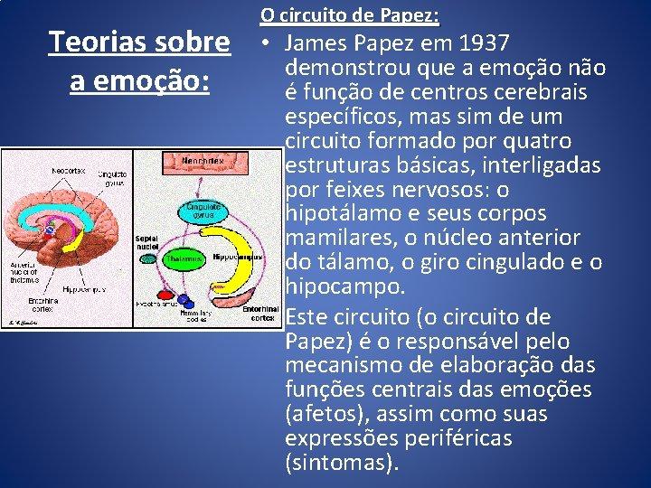 Teorias sobre a emoção: O circuito de Papez: • James Papez em 1937 demonstrou
