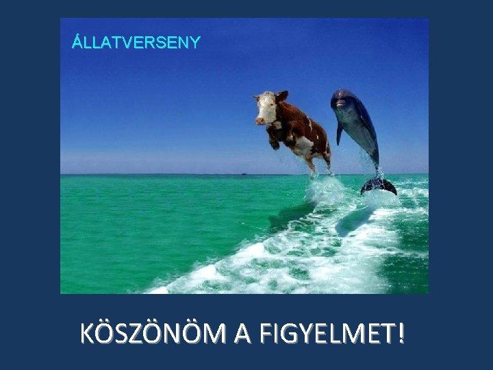 ÁLLATVERSENY KÖSZÖNÖM A FIGYELMET!