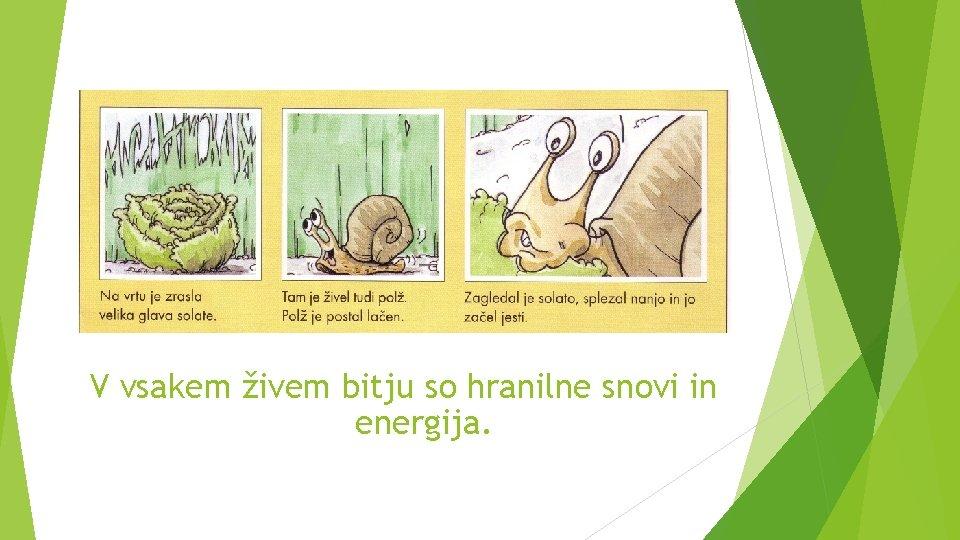 V vsakem živem bitju so hranilne snovi in energija.