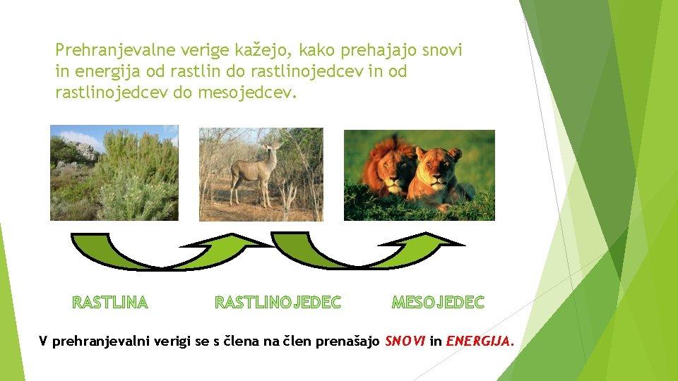 Prehranjevalne verige kažejo, kako prehajajo snovi in energija od rastlin do rastlinojedcev in od