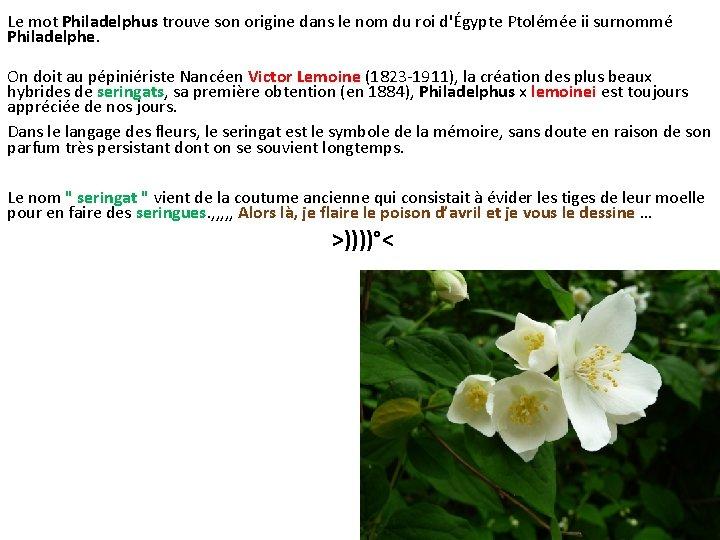 Le mot Philadelphus trouve son origine dans le nom du roi d'Égypte Ptolémée ii