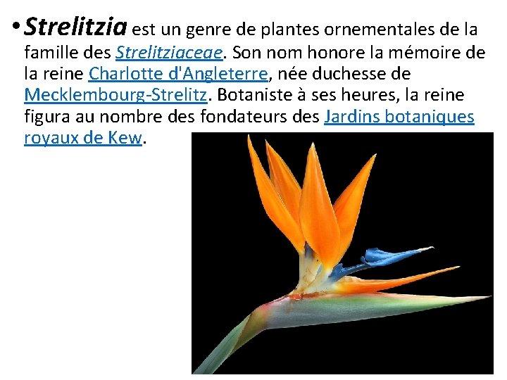 • Strelitzia est un genre de plantes ornementales de la famille des Strelitziaceae.