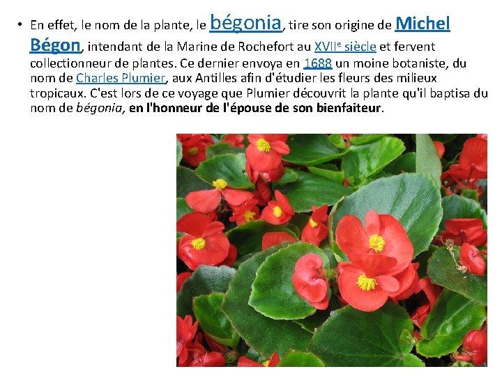 • En effet, le nom de la plante, le bégonia, tire son origine