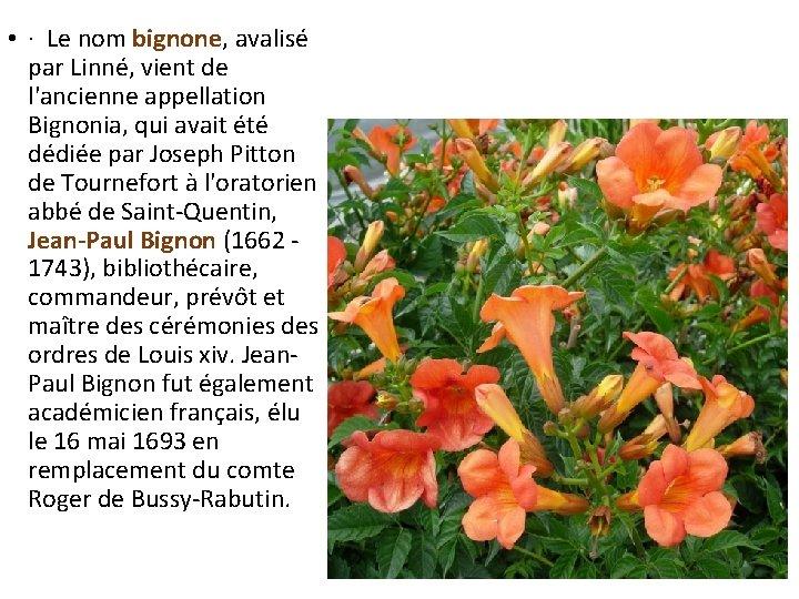 • · Le nom bignone, avalisé par Linné, vient de l'ancienne appellation Bignonia,