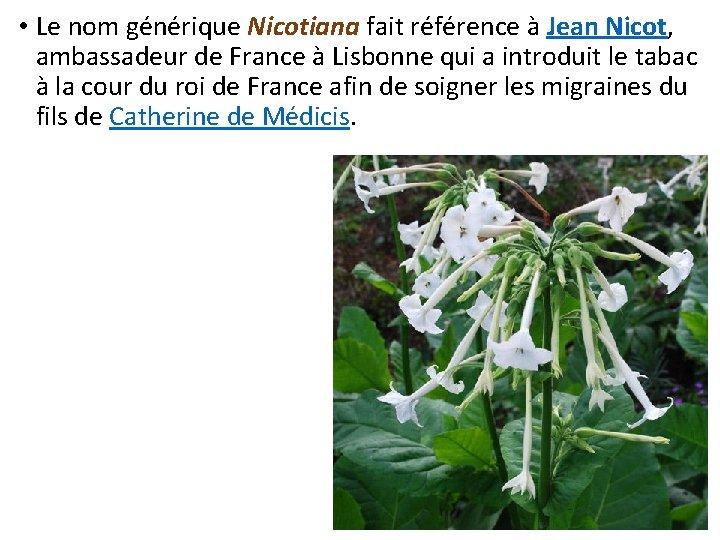 • Le nom générique Nicotiana fait référence à Jean Nicot, ambassadeur de France
