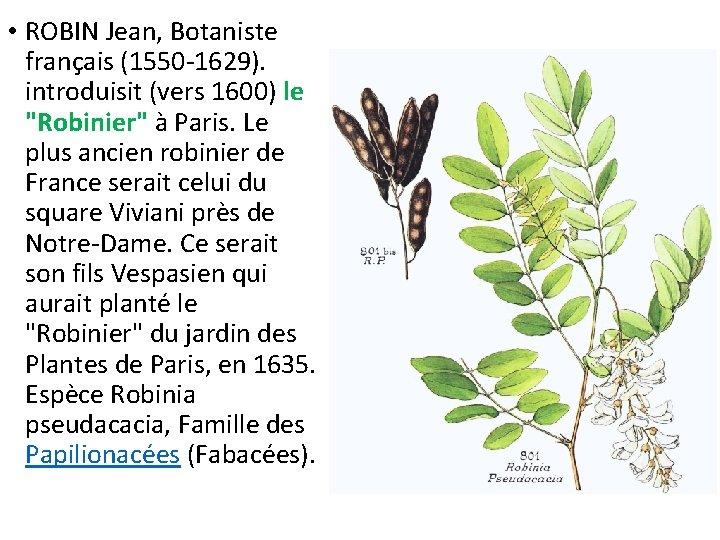 """• ROBIN Jean, Botaniste français (1550 -1629). introduisit (vers 1600) le """"Robinier"""" à"""