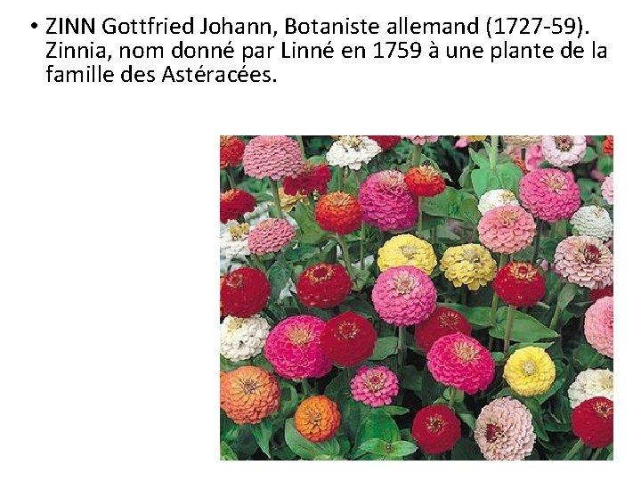 • ZINN Gottfried Johann, Botaniste allemand (1727 -59). Zinnia, nom donné par Linné