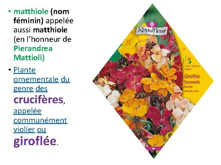 • matthiole (nom féminin) appelée aussi matthiole (en l'honneur de Pierandrea Mattioli) •