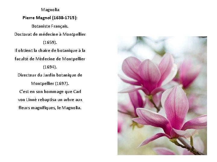 Magnolia Pierre Magnol (1638 -1715): Botaniste Français. Doctorat de médecine à Montpellier (1659). Il