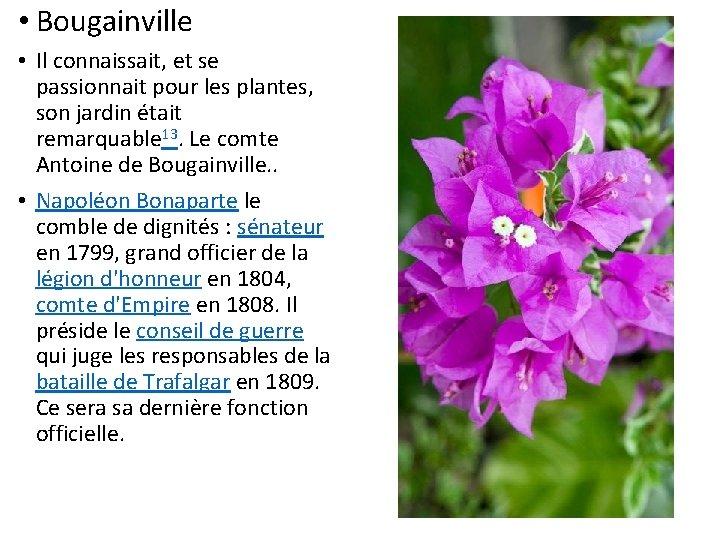 • Bougainville • Il connaissait, et se passionnait pour les plantes, son jardin