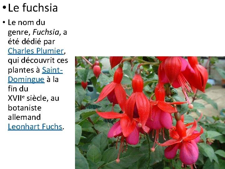 • Le fuchsia • Le nom du genre, Fuchsia, a été dédié par
