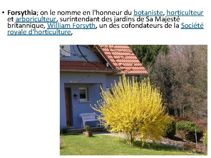 • Forsythia; on le nomme en l'honneur du botaniste, horticulteur et arboriculteur, surintendant
