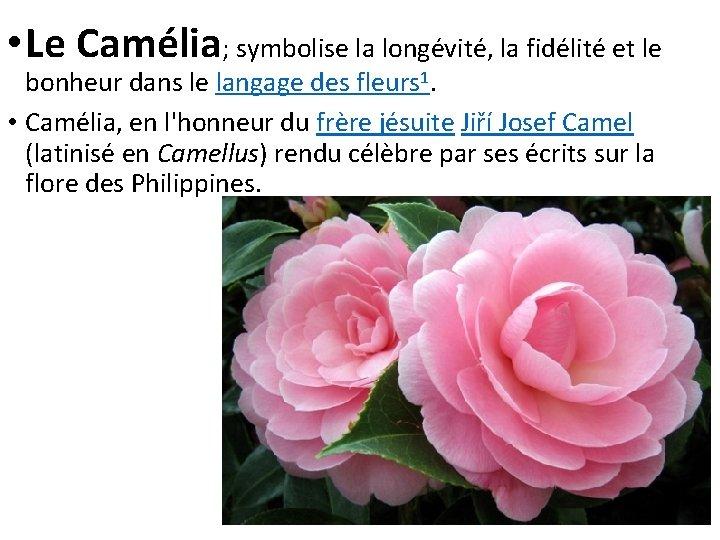 • Le Camélia; symbolise la longévité, la fidélité et le bonheur dans le
