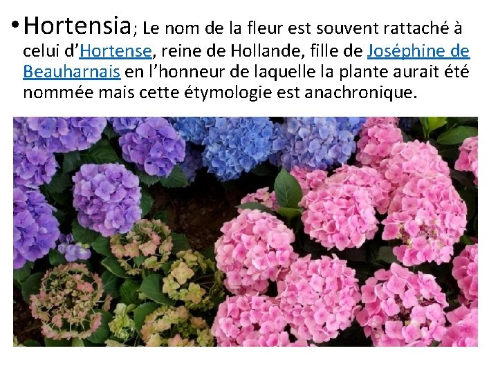 • Hortensia; Le nom de la fleur est souvent rattaché à celui d'Hortense,