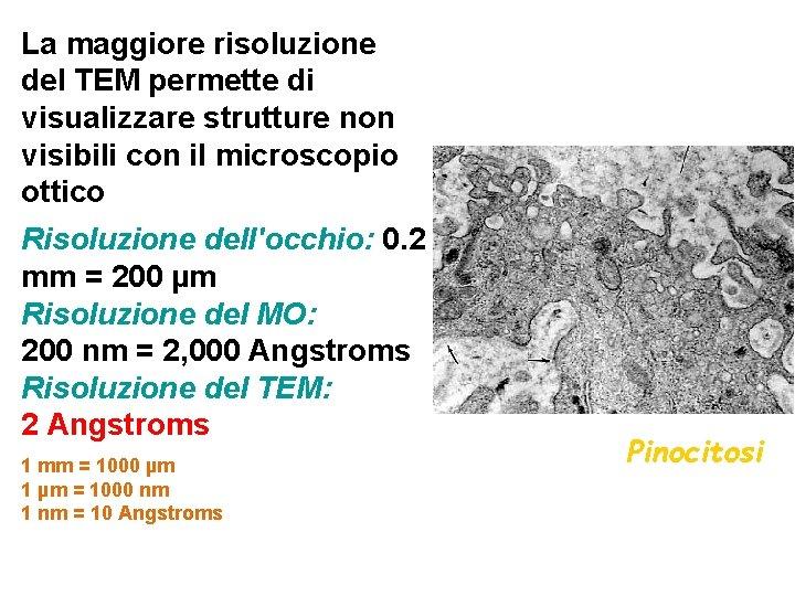 La maggiore risoluzione del TEM permette di visualizzare strutture non visibili con il microscopio