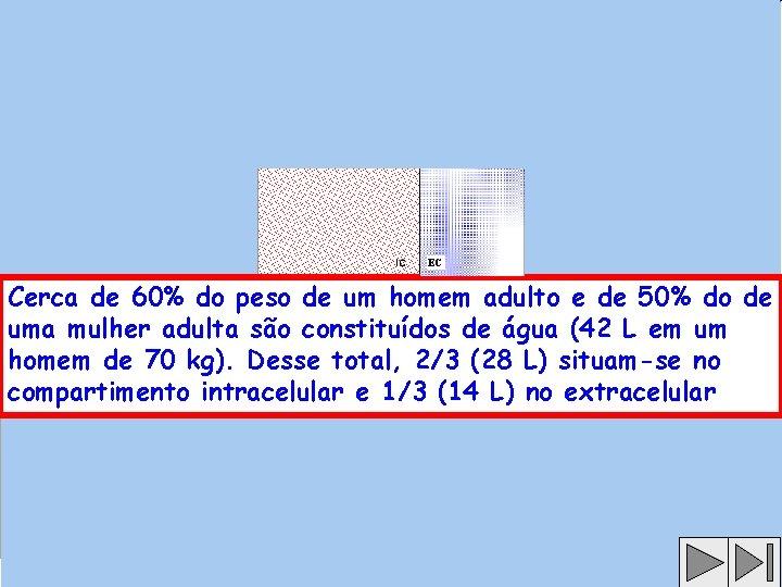 EC Cerca de 60% do peso de um homem adulto e de 50% do