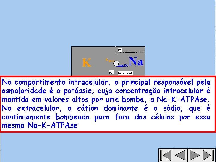 IV K K Na IC Na Intersticial No compartimento intracelular, o principal responsável pela