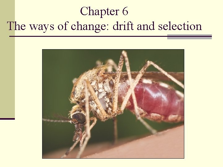 Chapter 6 The ways of change: drift and selection