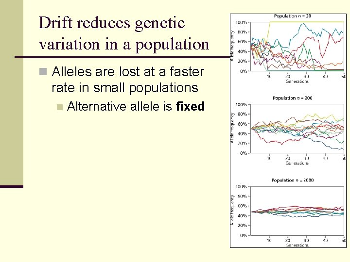 Drift reduces genetic variation in a population n Alleles are lost at a faster
