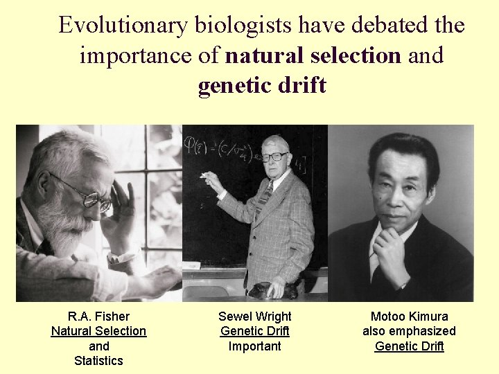 Evolutionary biologists have debated the importance of natural selection and genetic drift R. A.