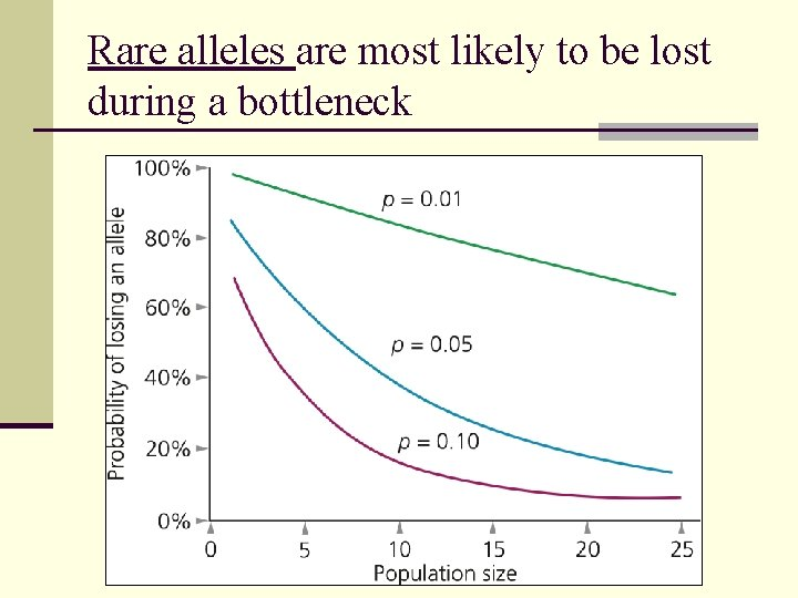 Rare alleles are most likely to be lost during a bottleneck