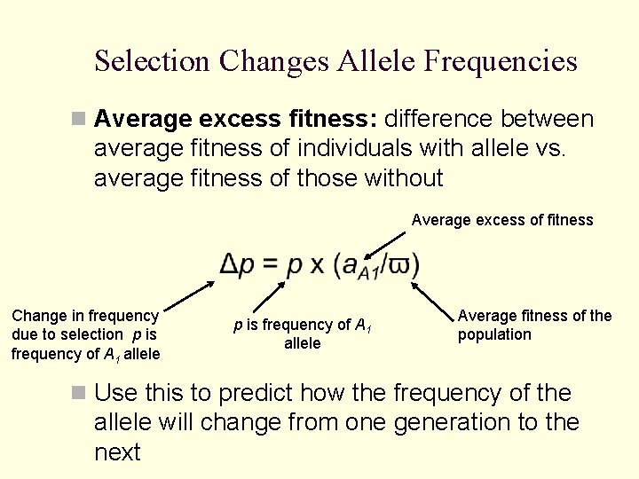 Selection Changes Allele Frequencies n Average excess fitness: difference between average fitness of individuals