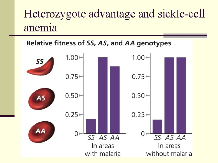 Heterozygote advantage and sickle-cell anemia