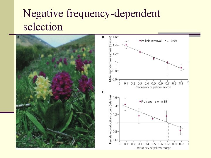 Negative frequency-dependent selection