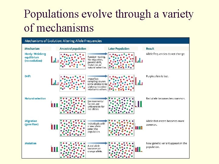 Populations evolve through a variety of mechanisms