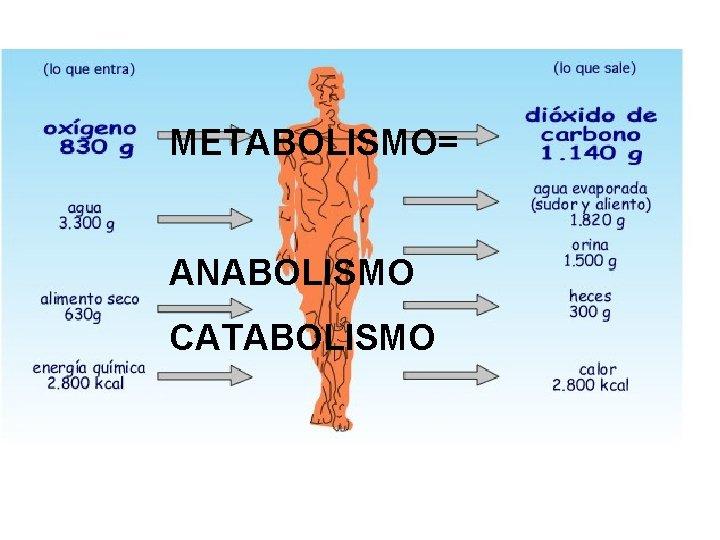 METABOLISMO= ANABOLISMO CATABOLISMO
