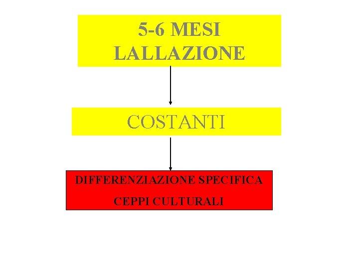 5 -6 MESI LALLAZIONE COSTANTI DIFFERENZIAZIONE SPECIFICA CEPPI CULTURALI